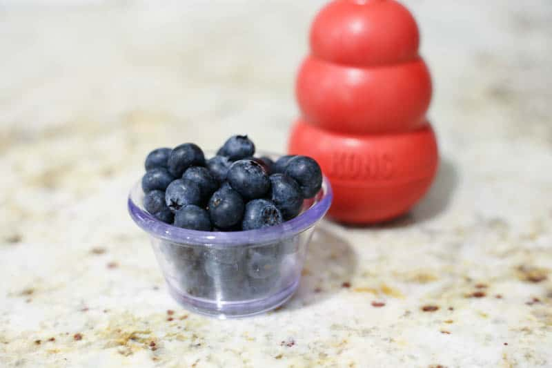 blueberries kong fillers, blueberries on counter